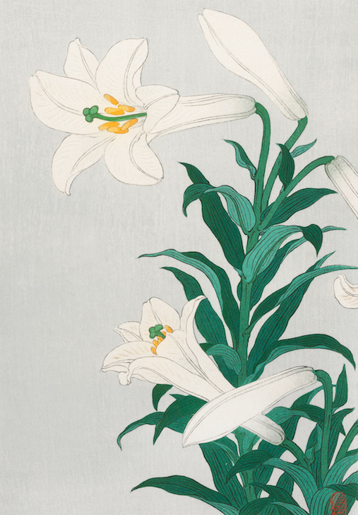 Lilies, Ohara ( 1920 - 1930) by Ohara Koson (1877-1945). Original from the Rijks Museum. Digitally enhanced by rawpixel.
